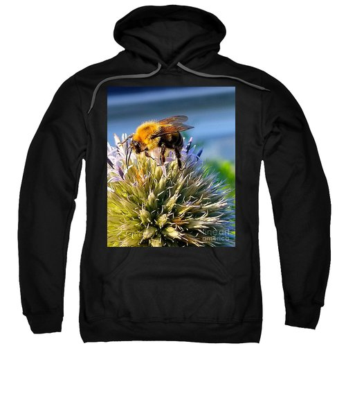 Curious Bee Sweatshirt