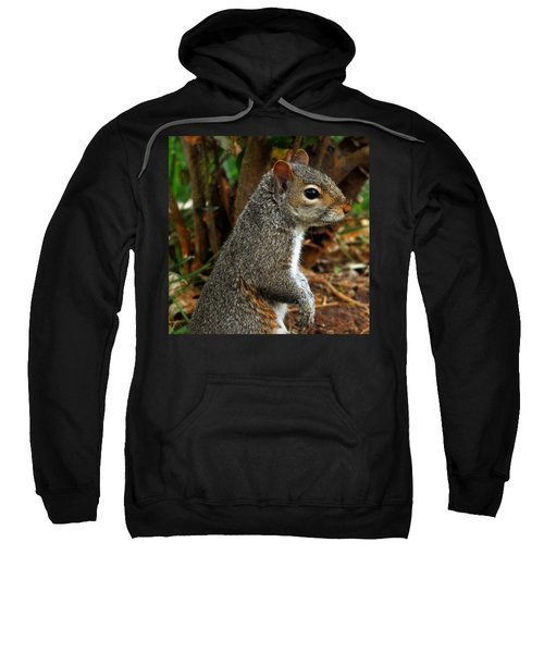Curious Sweatshirt