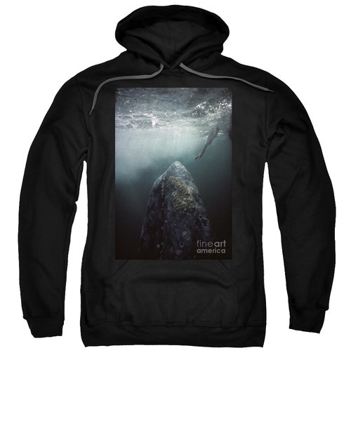Curious Gray Whale And Tourist Sweatshirt