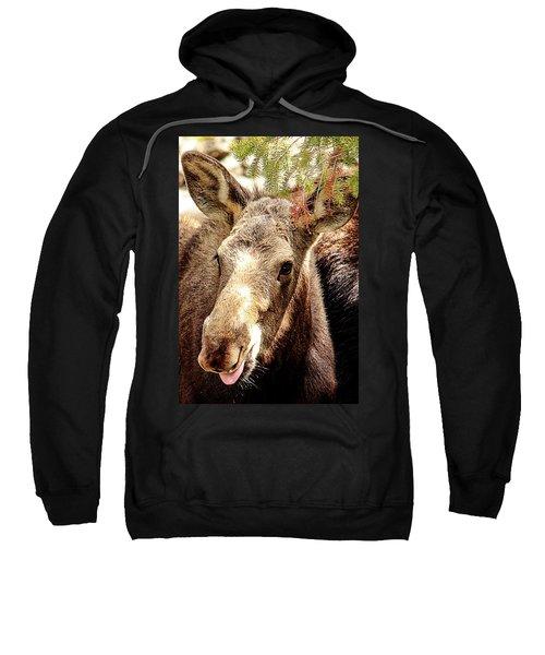 Cutie Moose Sweatshirt