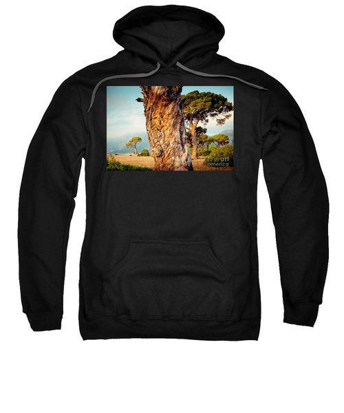 Dead Tree And Forest  Sweatshirt