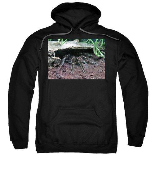 Desert Tarantula Sweatshirt