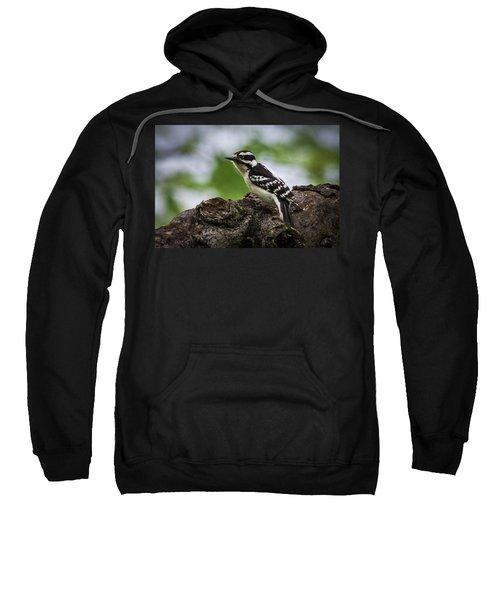 Downy Woodpecker Sweatshirt