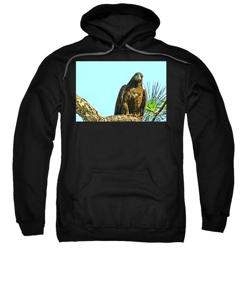 Eagle Series Here's Looking At You Sweatshirt