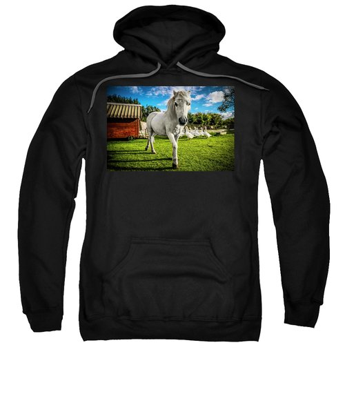English Gypsy Horse Sweatshirt
