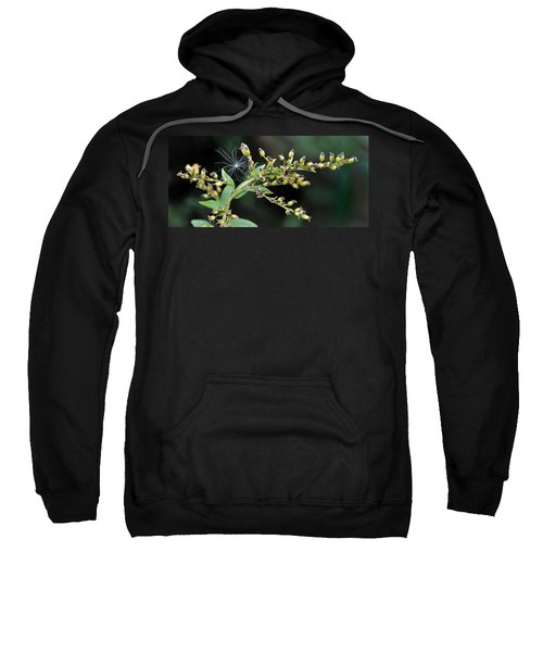 Entrapped Sweatshirt
