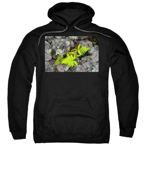 Fern And Lichen Sweatshirt