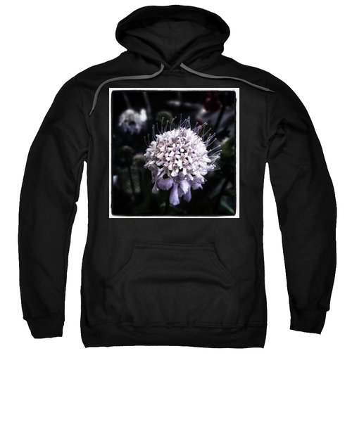 Sweatshirt featuring the photograph Field Scabious. A Member Of The by Mr Photojimsf