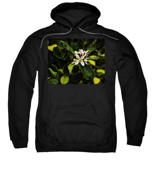 Flower Of The Lemon Tree Sweatshirt