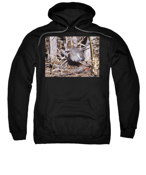 Fluffy Dove Sweatshirt
