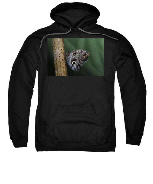 Giant Owl Butterfly On Screw Pine Sweatshirt