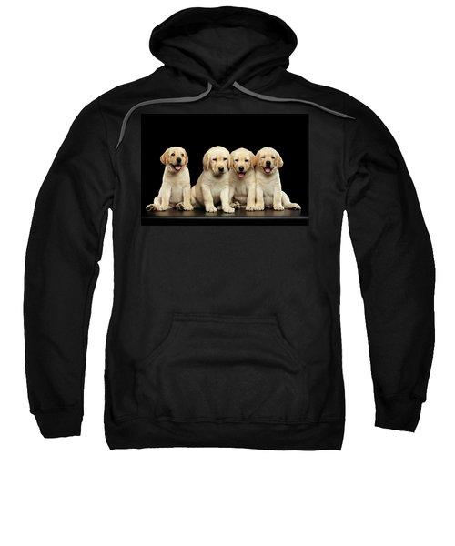 Golden Labrador Retriever Puppies Isolated On Black Background Sweatshirt