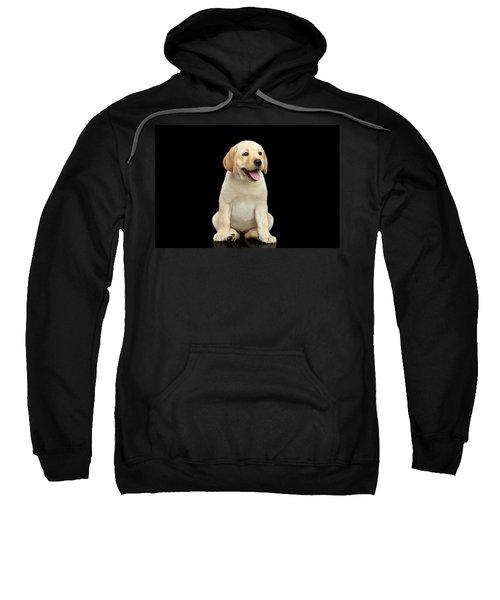 Golden Labrador Retriever Puppy Isolated On Black Background Sweatshirt