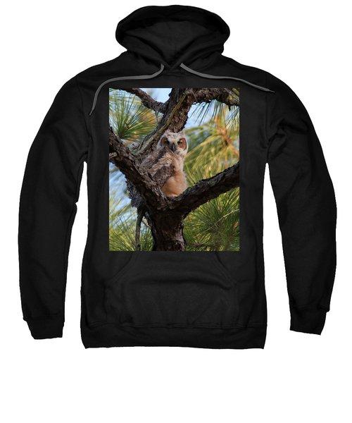 Great Horned Owlet Sweatshirt