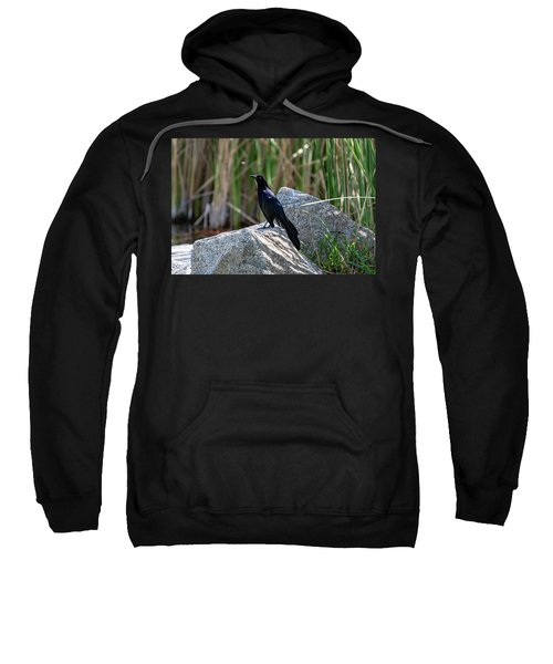Great-tailed Grackle Sweatshirt