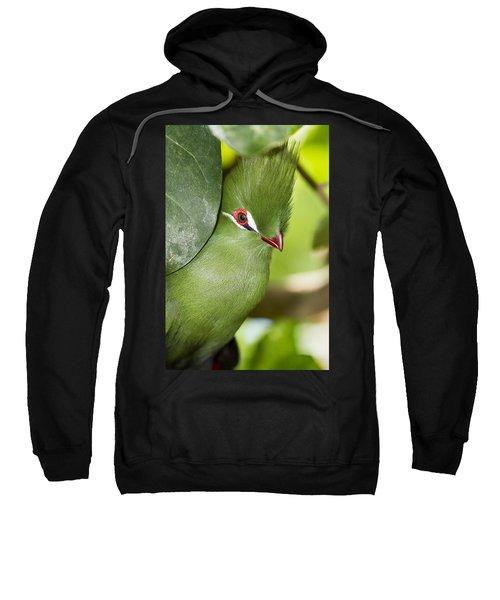 Green Turaco Bird Portrait Sweatshirt