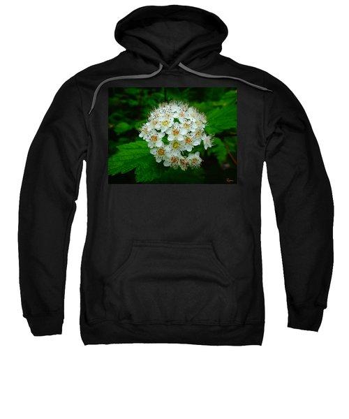 Hawthorn Hearts Sweatshirt