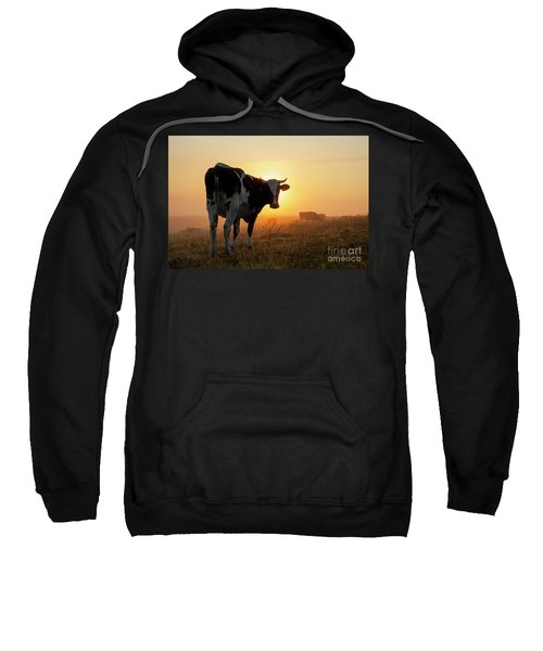 Holstein Friesian Cow Sweatshirt