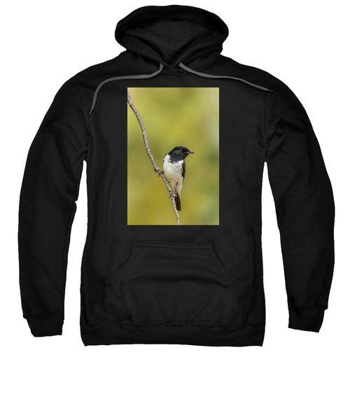 Hooded Robin Sweatshirt