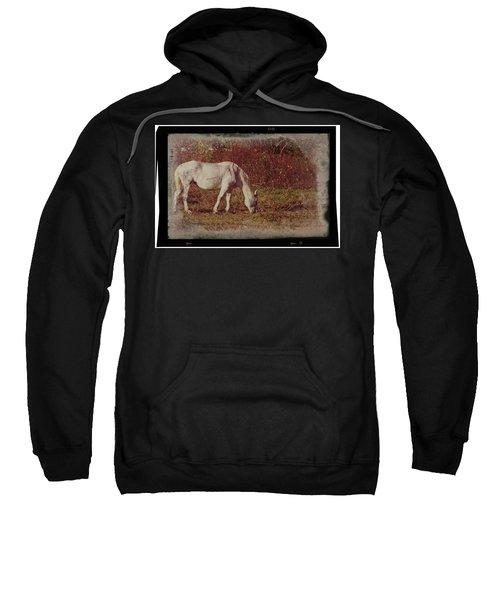 Horse Grazing Sweatshirt