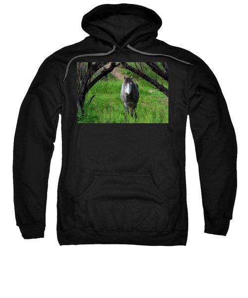 Horse's Arch Sweatshirt