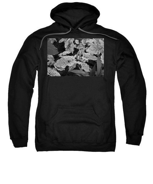 Hosta Bw - Pla363 Sweatshirt