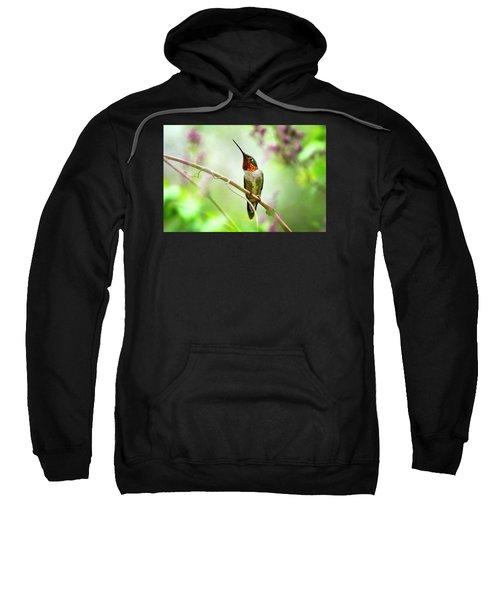 Hummingbird Looking For Love Sweatshirt