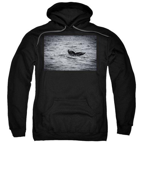 Humpback Whale Tail Sweatshirt