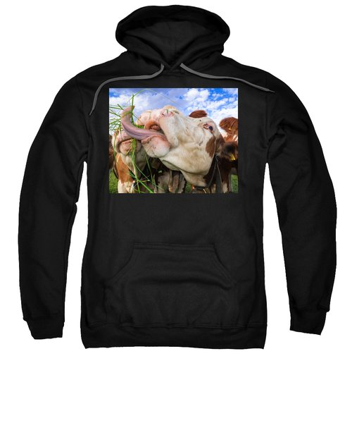 Hungry Cow Eating Grass Funny Picture Sweatshirt