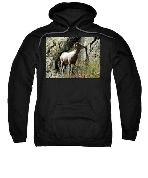 Irish Ram Sweatshirt
