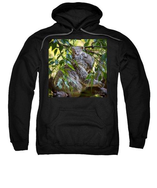 Koala Joey Sweatshirt by Jamie Pham
