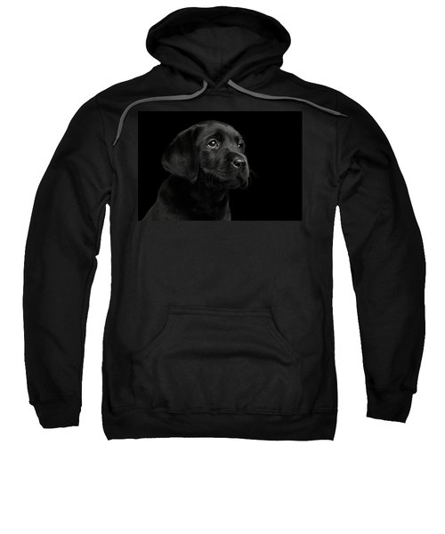 Labrador Retriever Puppy Isolated On Black Background Sweatshirt