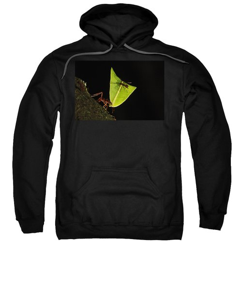 Leafcutter Ant Atta Sp Carrying Leaf Sweatshirt by Cyril Ruoso