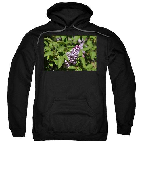 Lilacs 5551 Sweatshirt