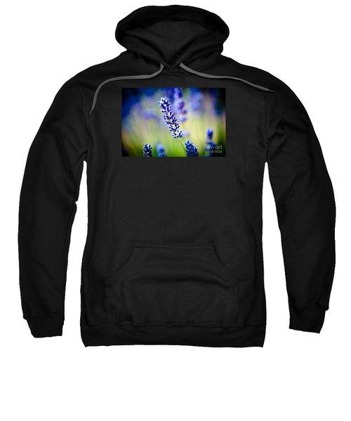 Macro Lavander Flowers In Lavender Field Artmif Sweatshirt