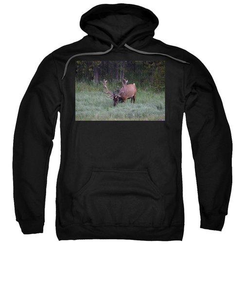 Bull Elk Rocky Mountain Np Co Sweatshirt