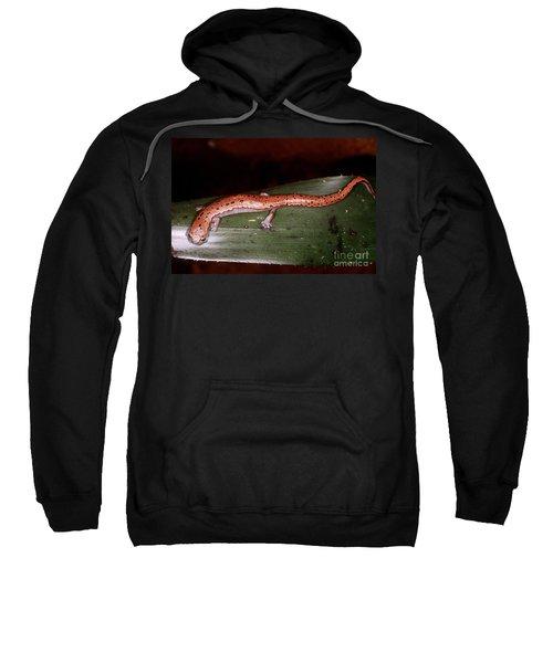 Mexican Palm Salamander Sweatshirt