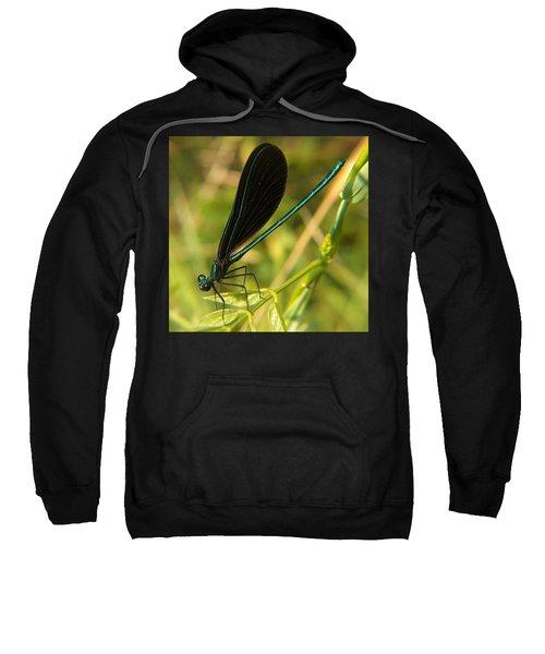 Michigan Damselfly Sweatshirt