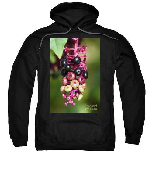 Mixed Berries On Branch Sweatshirt