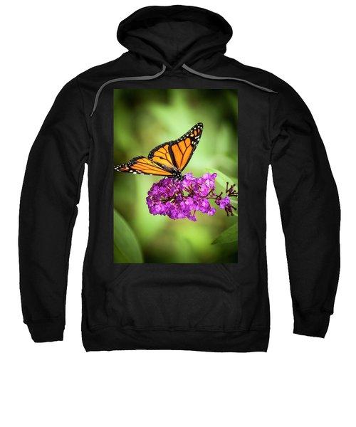 Monarch Moth On Buddleias Sweatshirt