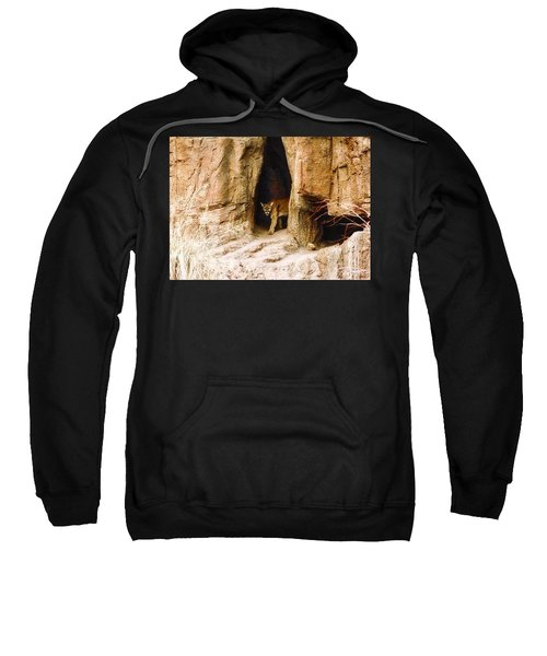 Mountain Lion In The Desert Sweatshirt