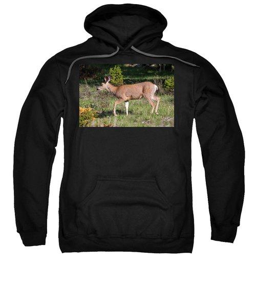 Mule Deer Doe Sweatshirt