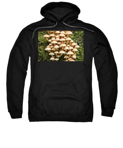 Mushroom Condo Sweatshirt