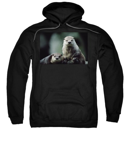 North American River Otter Lontra Sweatshirt by Gerry Ellis