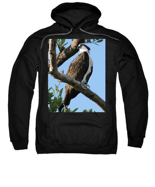 Osprey - Perched Sweatshirt