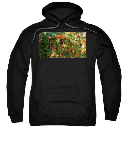 Paradise For Persimmons Sweatshirt