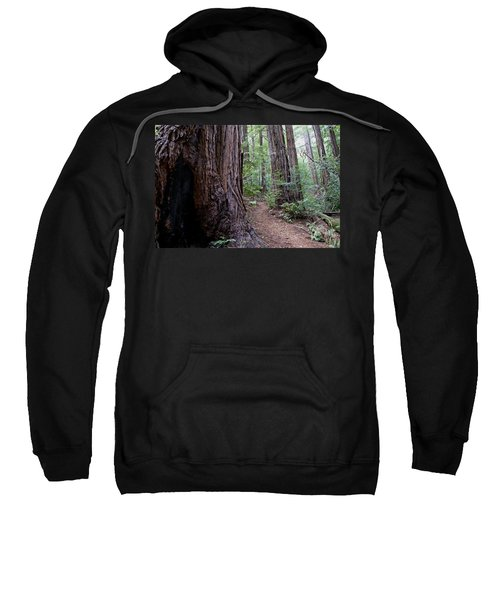 Pathway Through A Redwood Forest On Mt Tamalpais Sweatshirt