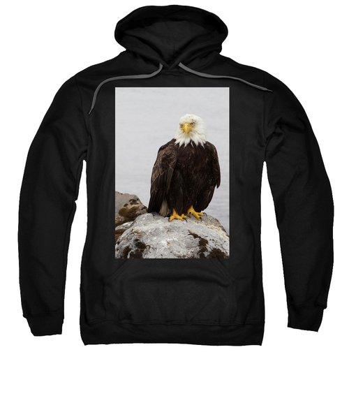 Perched Bald Eagle Sweatshirt