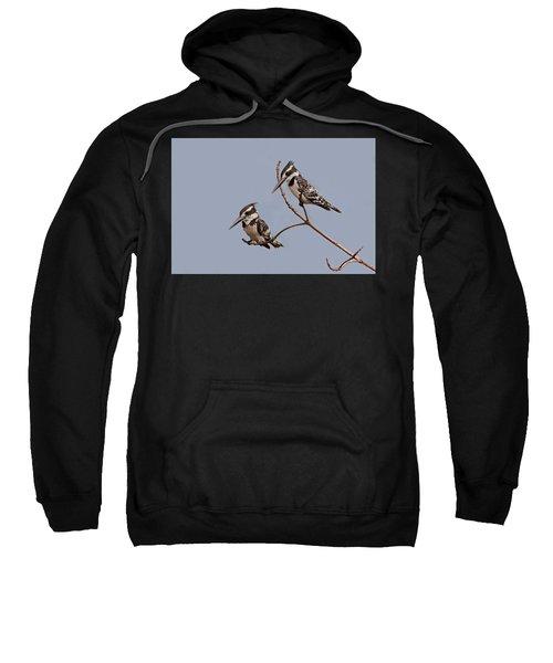 Pied Kingfisher Pair Sweatshirt