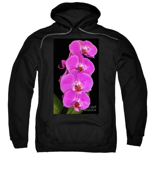 Pink Orchid Against A Black Background Sweatshirt